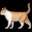 :cat2: