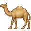 :dromedary_camel: