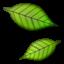 :leaves: