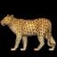 :leopard: